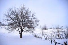 Bloßer gefrorener Baum auf dem Gebiet des verschneiten Winters unter blauem Himmel Stockfotos