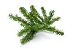 Bloßer Plastikzweig vom Weihnachtsbaum Lizenzfreie Stockbilder