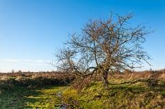 Bloßer solitairy Baum in einem Naturreservat Lizenzfreies Stockfoto