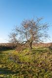 Bloßer solitairy Baum in einem Naturreservat Stockfoto