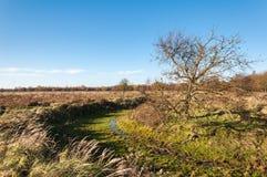 Bloßer solitairy Baum in einem Naturreservat Stockfotografie