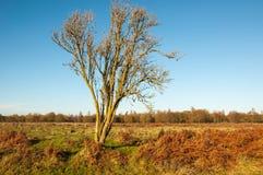 Bloßer solitairy Baum in einem Naturreservat Stockfotos