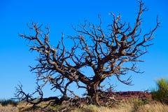 Bloßer toter Baum gegen blauen Himmel Lizenzfreie Stockfotografie