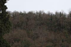Bloßer Wald im Winter lizenzfreie stockbilder