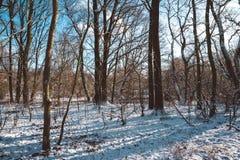 Bloßer Wald und Snowy gerieben auf Sunny Winter Day Stockbild