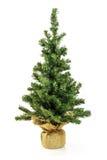 Bloßer Weihnachtsbaum ohne Dekoration Stockfoto