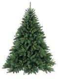 Bloßer Weihnachtsbaum ohne Dekoration Lizenzfreies Stockbild