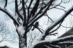 Bloßer Winterhimmel der Baumbirke Lizenzfreies Stockfoto