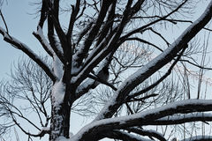 Bloßer Winterhimmel der Baumbirke Stockbilder