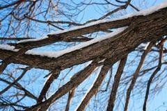 Bloßer Wintervogel der Birke Lizenzfreies Stockfoto