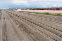 Bloßes Ackerland mit Tulpefeldern Lizenzfreie Stockfotografie