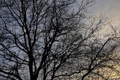 Bloßes Baumprofil Stockbilder