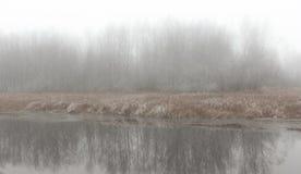 Bloßes Küstenholz in einem Nebel Stockfotos