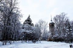 Bloßes Unter des Winterbaums Stockfotografie