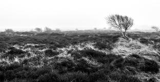 Bloßer einsamer Baum ist morgens Herbstnebel Texel-Insel, die Niederlande stockfotos