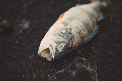 Bloated dead poisoned fish lies on the bank of the river Stock Photo
