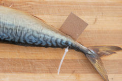 Bloated fish with cardboard nameplate Stock Images