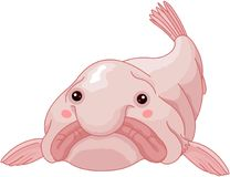 Free Blob Fish Stock Images - 105117224
