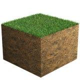 Bloc d'herbe Photographie stock libre de droits