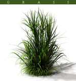 Bloc d'herbe Image libre de droits
