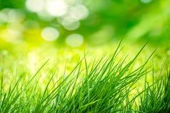 Bloc d'herbe Photos libres de droits