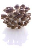 Bloc de champignon de couche Photographie stock libre de droits