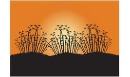 Bloc des silhouettes trois de bambou Photo libre de droits