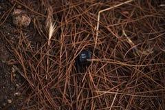 Bloc num. Close up of a piece of broken keyboard Stock Photo