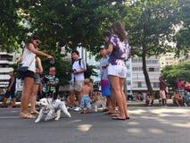 Blocao Rio de Janeiro Carnival pour des chiens banque de vidéos
