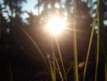 Bloccaggio di erba fotografie stock