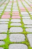 Blocchetti della pietra con muschio Fotografia Stock