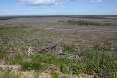 Blocchetto boreale del taglio della foresta Fotografia Stock