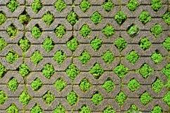 Blocchetto del mattone con erba. immagine stock