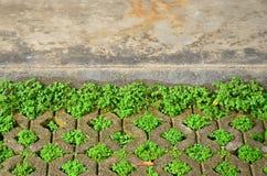 Blocchetto del mattone con erba. fotografia stock