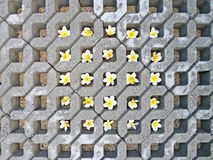 Blocchetto del tappeto erboso con i fiori di plumeria Fotografia Stock Libera da Diritti