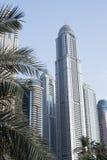Blocchetto di torre osservato attraverso le fronde della palma nel Dubai Immagine Stock