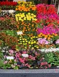 Blocchi con i lotti dei vasi da fiori e del prezzo da pagare delle merci Fotografie Stock