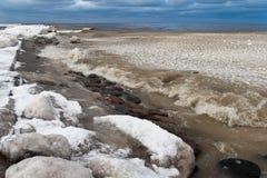 Blocchi di ghiaccio congelati nel mare immagine stock