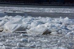 Blocchi di ghiaccio di galleggiamento sul fiume Immagine Stock