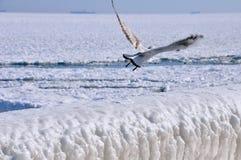 Blocchi di ghiaccio su un pilastro Fotografia Stock Libera da Diritti