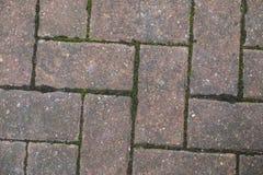 Blocco che pavimenta con la crescita verde del muschio Fotografia Stock Libera da Diritti