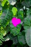 Blocco note in bianco o rosa appiccicoso delle note sul fondo delle foglie verdi immagine stock