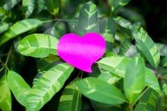 Blocco note in bianco o rosa appiccicoso delle note sul fondo delle foglie verdi fotografia stock libera da diritti