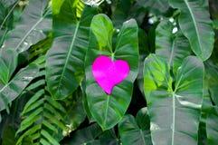 Blocco note in bianco o rosa appiccicoso delle note sul fondo delle foglie verdi immagini stock libere da diritti