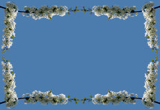 Blocco per grafici #02 del fiore (gigante) Fotografie Stock Libere da Diritti