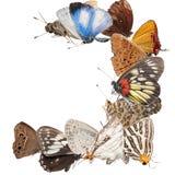Blocco per grafici in bianco della farfalla Immagini Stock Libere da Diritti