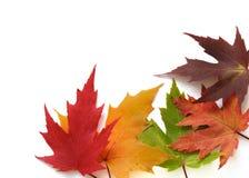 Blocco per grafici d'autunno dei fogli colorati immagini stock