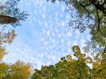 Blocco per grafici d'autunno del foglio Fotografia Stock Libera da Diritti