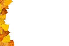 Blocco per grafici dei fogli di autunno Fotografia Stock