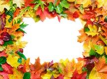 Blocco per grafici dei fogli di autunno Immagini Stock Libere da Diritti